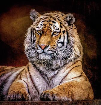 Amur Tiger by Brian Tarr