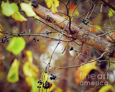 An Autumn Chickadee by Kerri Farley