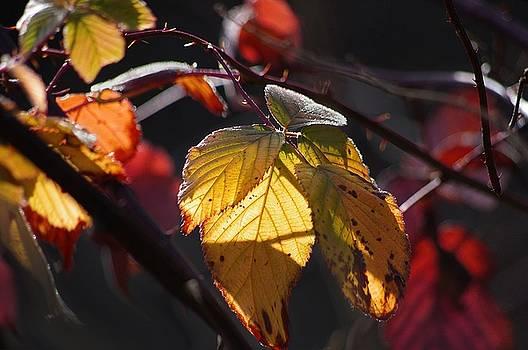 An Autumn Day  by Arthur Miller