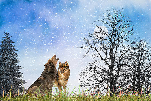An Early Winter Howl by Diane Schuster