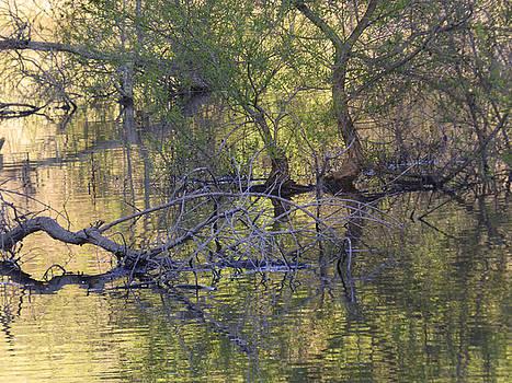 An other side of the lake by Natalya Shvetsky