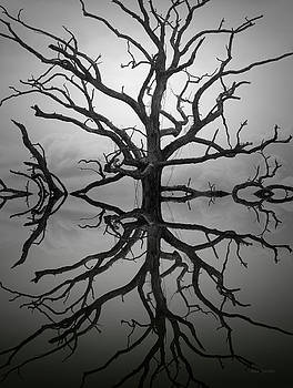 Dave Gordon - Ancient Oak Tree Montage
