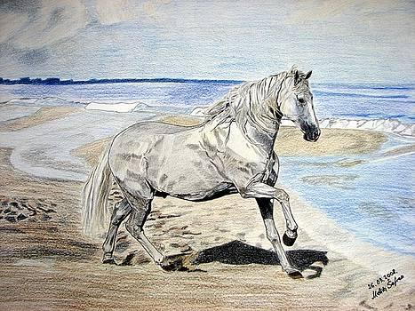 Andalusian horse by Melita Safran