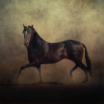 Andalusian by Sue Fulton
