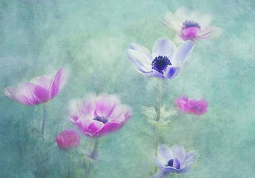 Anemonas by Claudia Moeckel