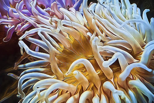 Anemone Flower by Joe Sparks