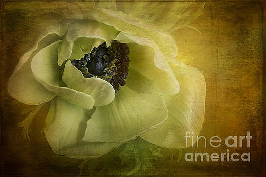 Anemone Romance by Ann Garrett