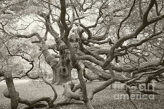 Angel Oak Antiqued by Dodie Ulery