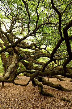 Angel Oak by Greg Simmons