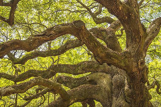 Angel Oak I by Steven Ainsworth