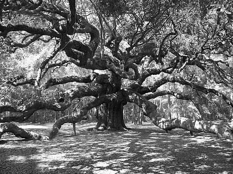 Angel Oak Tree Black and White by Melanie Snipes