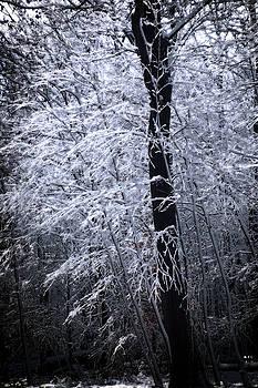 Angel Tree by Yuri Lev