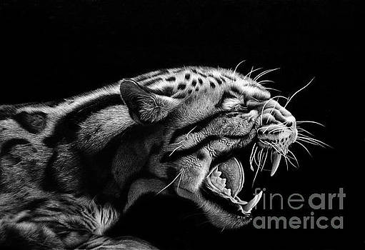Anger by Miro Gradinscak
