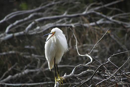 Diana Haronis - Angry Bird