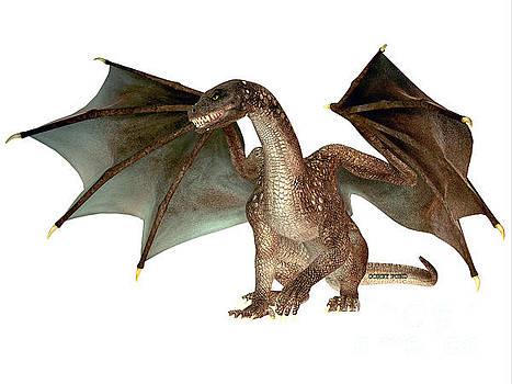 Corey Ford - Angry Dragon