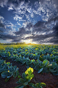 Ankle High in July by Phil Koch