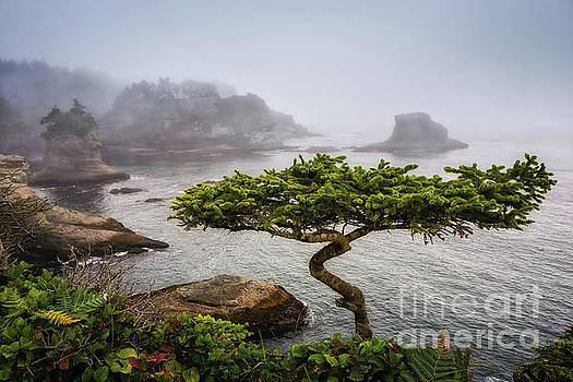 Another Bonsai by Carrie Cole