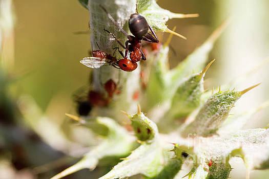 Ant Farming by Steve Triplett