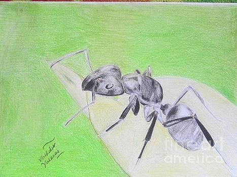 Ant by Vashdev Valasai