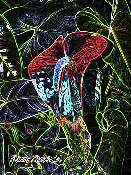 Anthurium by Randy Sylvia