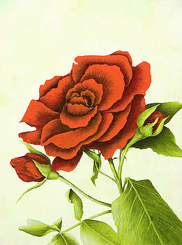 Antique Red Rose by Mary Ann King