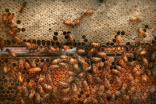 Mike Savad - Apiary - Bee