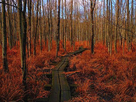 Raymond Salani III - Appalachian Trail Boardwalk