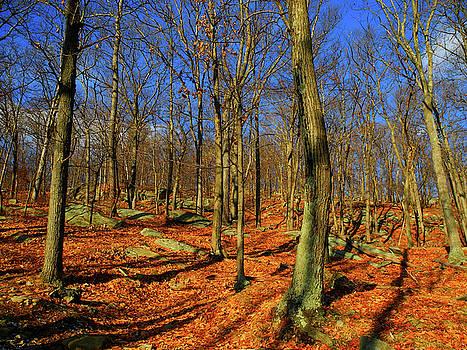 Appalachian Trail Goes Through Harriman State Park by Raymond Salani III