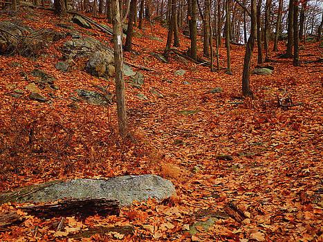 Appalachian Trail in NY South Mountain by Raymond Salani III