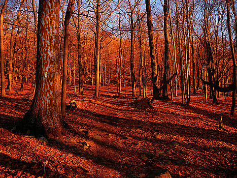 Appalachian Trail NewYork's Green Pond Mountain by Raymond Salani III