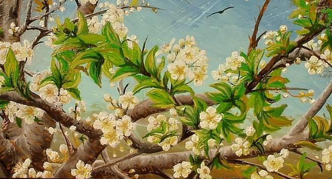 Apple blossom by Sorin Apostolescu