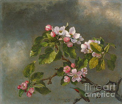 Apple Blossoms and Hummingbird 1875 by Padre Art