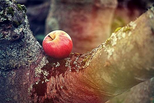 Apple On The Branch by Anne Macdonald