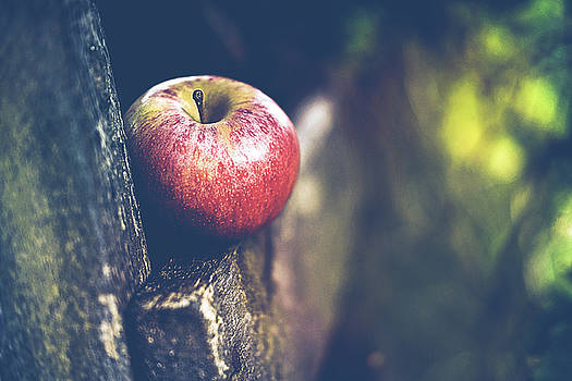 Apple On The Fence by Anne Macdonald