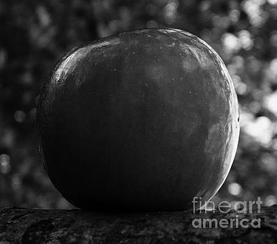 Apple One by J L Zarek