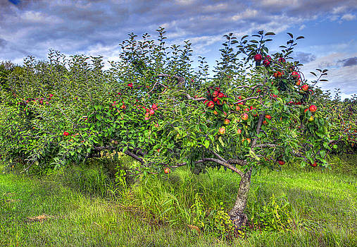 Apple pie or Hard cider by David Simons