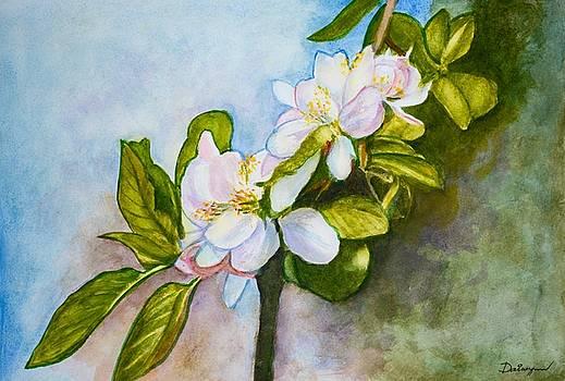 Apple Tree Flowers by Dai Wynn