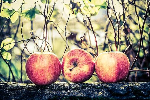 Apples On The Wall by Anne Macdonald