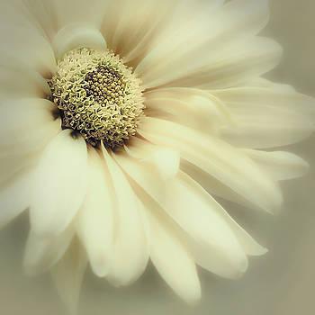 Arabesque in Soft Moss by Darlene Kwiatkowski