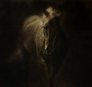 Arabian Gold by Sue Fulton