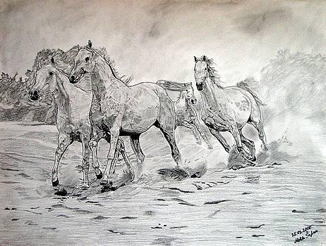 Arabian horses by Melita Safran