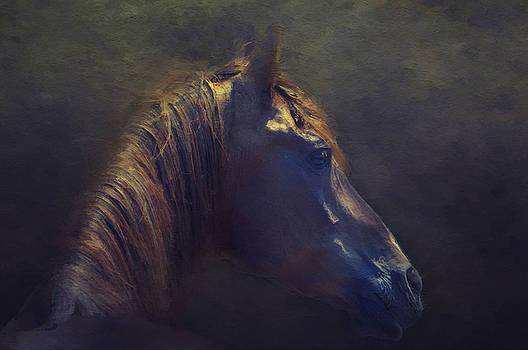Arabian Portrait by Sue Fulton