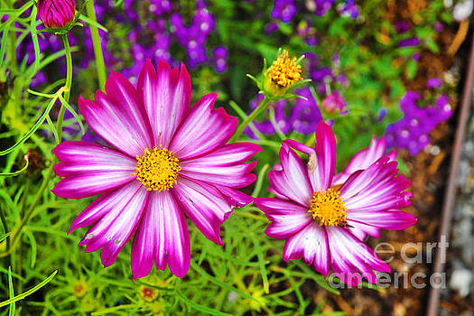 Arboretum Beauties by Jeff McJunkin