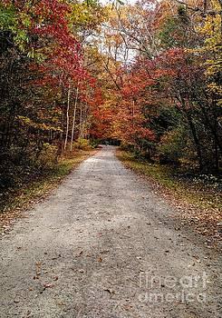 Arboretum Trail by Anita Adams