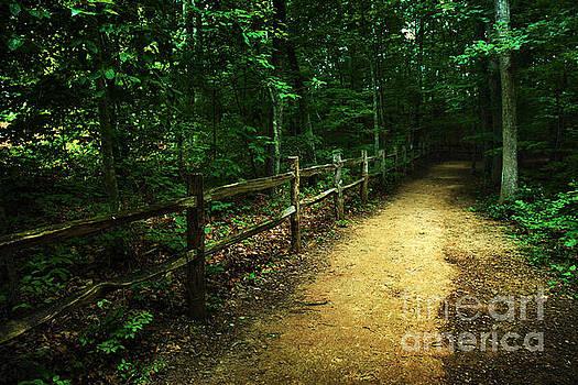 Jeff McJunkin - Arboretum Trail 2