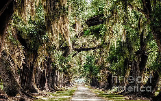 Kathleen K Parker - Arch of Oaks - Evergreen Plantation