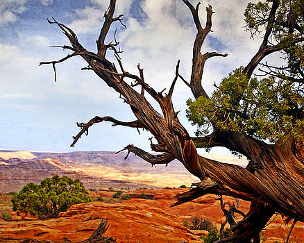 Marty Koch - Arches Landscape 7a