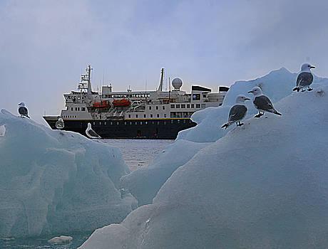 Arctic birds by Jim Kuhlmann