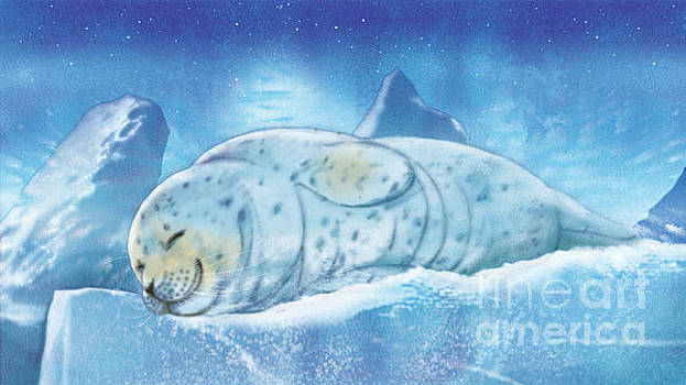 Arctic Seal by Tracy Herrmann