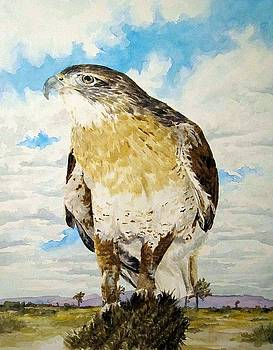 Arizona Hawk by Theresa Higby